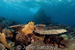 kormoran Wreck Tiran island Egypt by Javier Sandoval