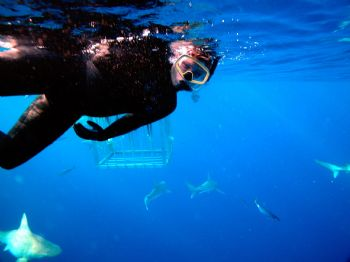 Just thought I would help attract more sharks to the cage... by Jeffrey Cowie