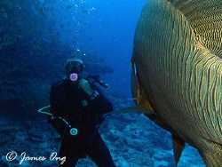 CHARGE!!!! Napoleon Wrasse in coming!!! Tools: Canon S1 I... by James Ong