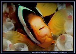 A clown fish ... :O) ... by Michel Lonfat
