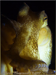 Portrait of an Octopus, photo taken at Puri Jati, Bali (C... by Marco Waagmeester