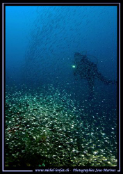 "Diver behind a ""curtain"" of Glass Fish .... :O) .... by Michel Lonfat"