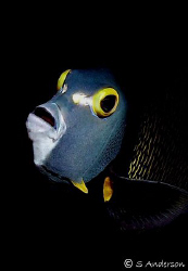 This photo was taken last Thursday while diving on San Fr... by Steven Anderson