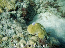 Christmas Tree worms on coral on the Inside Reef at Laude... by Michael Kovach