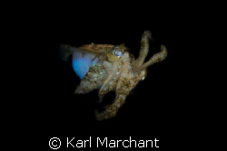 Mars Attacks. 