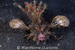 The Devil