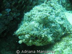 Stone Fish at neptune's in Cabo San Lucas by Adriana Manjarrez