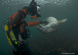 Attack of the killer seal.