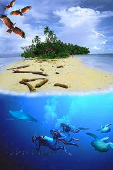Solomon Islands - COMPOSING > eagles/shark/divers/turtles... by Manfred Bail