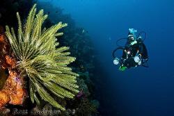 My second best dive buddy, Kristin and crinoid.  Wakatobi... by Ross Gudgeon
