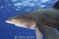 350D Tokina 10-17mm 2 x ys90's