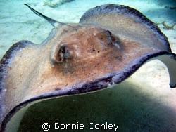 Here he is again! Heading right for me.  They come so clo... by Bonnie Conley