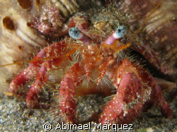 Hermit Crab, see the small crabs in the upper left of the... by Abimael Márquez