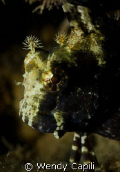 blenny from under Sam's dock by Wendy Capili