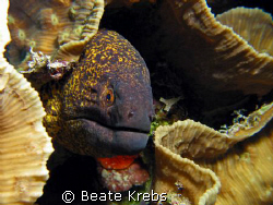 Moray Eel , taken with Canon S70 and Macro lens by Beate Krebs