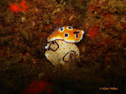 Mix and Match Nudi Love :), found this rather uncommon co... by Allen Walker