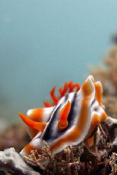 Orange Nudibranch: Casio Exilim ZX 1200 by Andrew Macleod