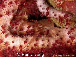 2008/10/25 by Harry Yang