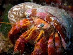 nice symbiosis in the sea by Andrea Severino