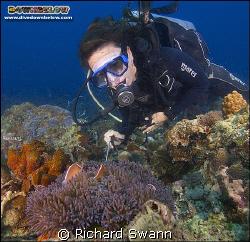 You just gotta love Clown Fish !! Nikon D2x 12-24 lens ma... by Richard Swann