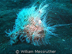 Ï can't do a thing with my hair! Sea and Sea 1G YS120 St... by William Messruther
