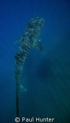 On our way back from a dive on 7 mile we came upon this f... by Paul Hunter