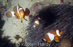 nemo and his mates. by Kristen Hardy