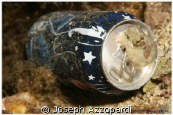 Always pepsi cola. canon 30D Ds125 strobe and normal lens. by Joseph Azzopardi