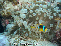took this photo on White Knight Reef, this is in the shar... by Stephen Carr