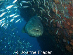 THIS DIVE WAS AWESOME !!! by Joanne Fraser