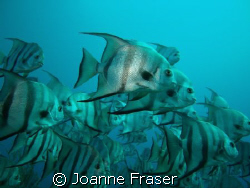 TAKEN AT THE DELRAY GROUPER HOLE by Joanne Fraser