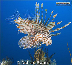 Pose for the camera ! Nikon D2x 24mm lens manual exposure. by Richard Swann
