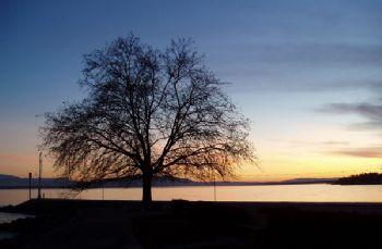 Coucher de soleil sur le Lac de Genève / Nyon - Suisse by Philippe Brunner