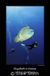 large napoleon wrasse and two divers 10mm tokina by Stew Smith