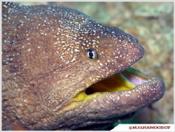 Yellow Mouth Eel took it when I was in Masandam \ Oman by... by Mohammed Al Hamood