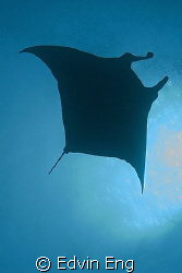 The Stealth! Taken in Maldives with Canon G9. by Edvin Eng