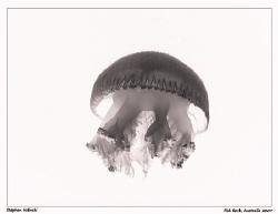 Jellyfish X-ray? by Stephen Holinski