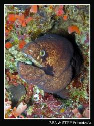 Moray eel. Canon G9 & Inon D2000 strobe. by Bea & Stef Primatesta