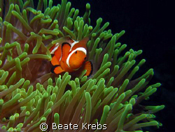 Nemo on the green ground, taken with Canon S70 and Macro ... by Beate Krebs