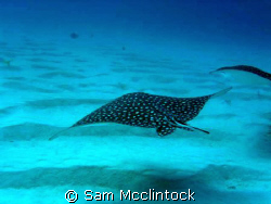 Catchin' Some Rays by Sam Mcclintock