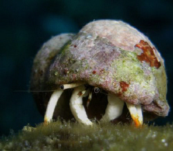 A hermit crab Casio Exilim ZX1200 by Andrew Macleod