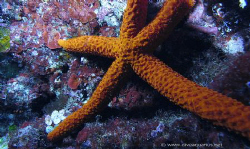 sea&Sea dx1g with wideangle by Andrea Severino