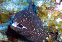 Good detail on an eel. Casio exilim z1200 by Andrew Macleod