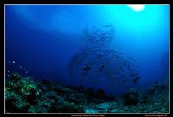 Small Barracuda Vortex at Sipadan's Barracuda Point  D3... by Kay Burn Lim