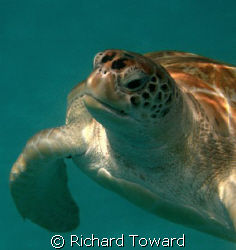 Close up shot of a Turtle by Richard Toward