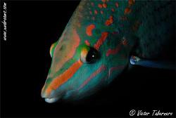 Guapeton fish by Victor Tabernero
