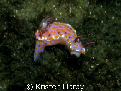 nudi at Bare Island, Sydney. by Kristen Hardy