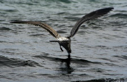 Lunch time for some is more difficult! Canon 350D by Andrew Macleod