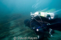 Winter diving in Prince William Sound Alaska. by David Hayes