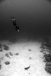 Free diver and reef shark.  Nikon d80, 2 x ds 51 strobe... by Cal Mero